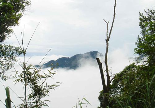 Vẻ đẹp núi rừng Tam Đảo e ấp sau áng mây trắng